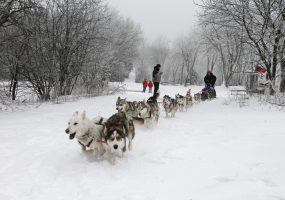 Hundeschlitten, Schwarze Berge, Rhön, Unterfranken, Bayern | Rhön, Franconia, Bavaria, Germany